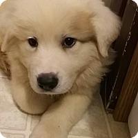 Adopt A Pet :: Chunk - Kyle, TX