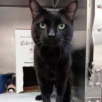 Adopt A Pet :: Hodor - Saskatoon, SK