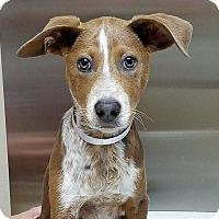 Adopt A Pet :: Lexie - Las Vegas, NV