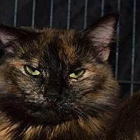 Adopt A Pet :: Sky - Saginaw, MI