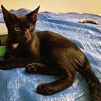Adopt A Pet :: Squeaks - Orange, CA