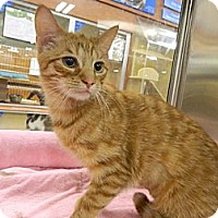 Adopt A Pet :: Taylor - The Colony, TX