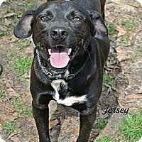 Adopt A Pet :: Jersey - Vancleave, MS
