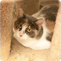 Adopt A Pet :: Tanga - Los Angeles, CA