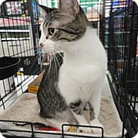 Adopt A Pet :: Spike - West Lafayette, IN