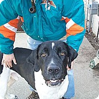 Adopt A Pet :: Captain - West Bloomfield, MI