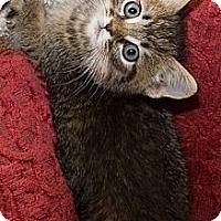 Adopt A Pet :: Jaclyn - Irvine, CA