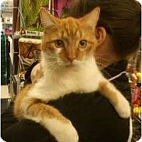 Adopt A Pet :: Gasket - Troy, OH