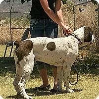 Adopt A Pet :: Monty - Alamogordo, NM