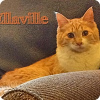 Adopt A Pet :: Ellaville - McDonough, GA