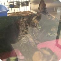 Adopt A Pet :: Nala - Byron Center, MI