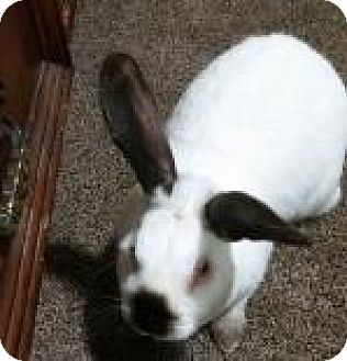 Other/Unknown Mix for adoption in Edmonton, Alberta - Charlie