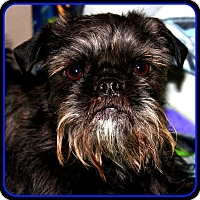 Adopt A Pet :: FINLEY - ADOPTION PENDING - Seymour, MO