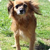 Adopt A Pet :: Papillion - Waldorf, MD