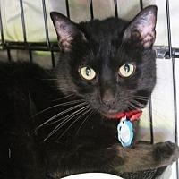 Adopt A Pet :: Weezy - Asheville, NC