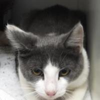 Adopt A Pet :: Lola - Robinson, IL