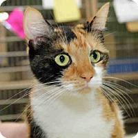 Adopt A Pet :: LUCETTA - Pittsburgh, PA
