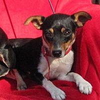 Adopt A Pet :: Sid - Oakland, AR