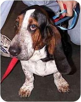 Basset Hound Mix Dog for adoption in Marietta, Georgia - Dancer