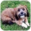 Photo 1 - Havanese Mix Dog for adoption in Los Angeles, California - SCARLETT ROSE