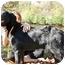 Photo 3 - Setter (Unknown Type) Mix Dog for adoption in Thomaston, Georgia - Smiley