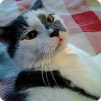Adopt A Pet :: Bradley (JT) - Little Falls, NJ