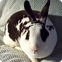 Adopt A Pet :: Lola - Santee, CA