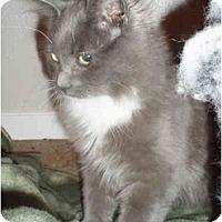 Adopt A Pet :: Hana - Davis, CA