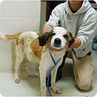 Adopt A Pet :: MOOSE - Wayne, NJ