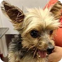 Adopt A Pet :: Stallone - Tallahassee, FL