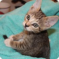 Adopt A Pet :: Snickers - Miami, FL