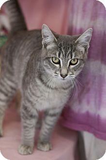 Domestic Shorthair Cat for adoption in Savannah, Georgia - Rog