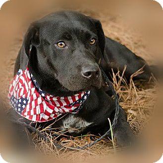 Labrador Retriever Mix Dog for adoption in Athens, Georgia - Teddy