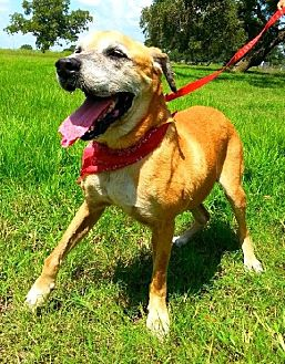 Labrador Retriever Mix Dog for adoption in Huntington, New York - Jude - N
