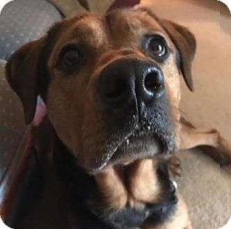 Rottweiler/Hound (Unknown Type) Mix Dog for adoption in Winfield, Pennsylvania - Maxter
