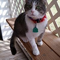 Adopt A Pet :: Sarge - Mexia, TX