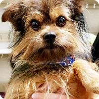 Adopt A Pet :: Cody - Oswego, IL