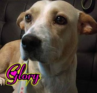 Cattle Dog Mix Dog for adoption in Des Moines, Iowa - Glory-adoption pending