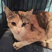 Adopt A Pet :: Marilyn - East Brunswick, NJ