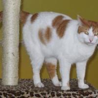 Adopt A Pet :: Radar 0308 - Jacksonville, FL