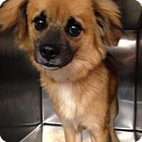 Adopt A Pet :: Buster - Albemarle, NC