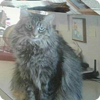 Adopt A Pet :: Sweetie Pie - Ypsilanti, MI