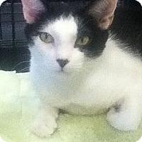 Adopt A Pet :: Malibu - Harriman, NY