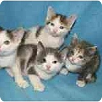 Adopt A Pet :: WHEAT, BARLEY, HAY, ALFALFA!! - Germantown, MD