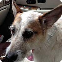 Adopt A Pet :: Rusty - Rhinebeck, NY
