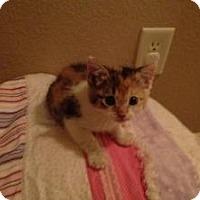 Adopt A Pet :: Kalli - justin, TX