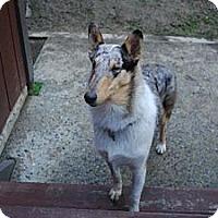 Adopt A Pet :: Desmond - Riverside, CA