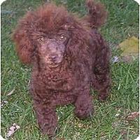 Adopt A Pet :: Twixer - Evansville, IN