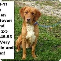 Adopt A Pet :: # 121-11 @ Animal Shelter - Zanesville, OH