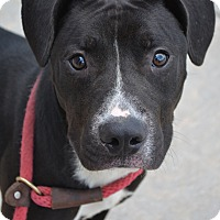 Adopt A Pet :: Limbo - Toledo, OH